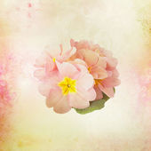 Card with Flower buds on watercolor background — Stock Photo