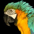 Macaw — Stock Photo #26726465