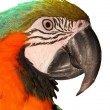 Macaw — Stock Photo #26727749