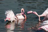 Flamingos — Foto Stock