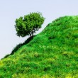 Stock Photo: Hillside