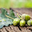 Acorn with leaves — Stock Photo #12037448