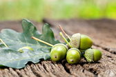 Acorn with leaves — Stock Photo