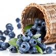Blueberries fall of the basket. — Stock Photo