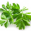 Bunch of green coriander - Stock Photo