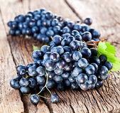 Grapes — Stock fotografie