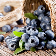 Blueberries have dropped from the basket — Stock Photo #12178926