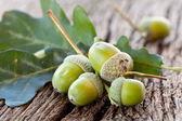 Ghianda con foglie — Foto Stock