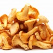 Chanterelles mushrooms. — Stok fotoğraf