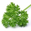 Parsley. — Stock Photo #14482465