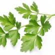 Stock Photo: Parsley.