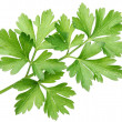 Parsley. — Stock Photo #14482653