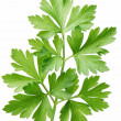 Parsley. - Stock Photo
