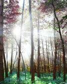 林地中极佳的颜色. — 图库照片