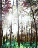 Woodland in fabulous colors. — Stock Photo