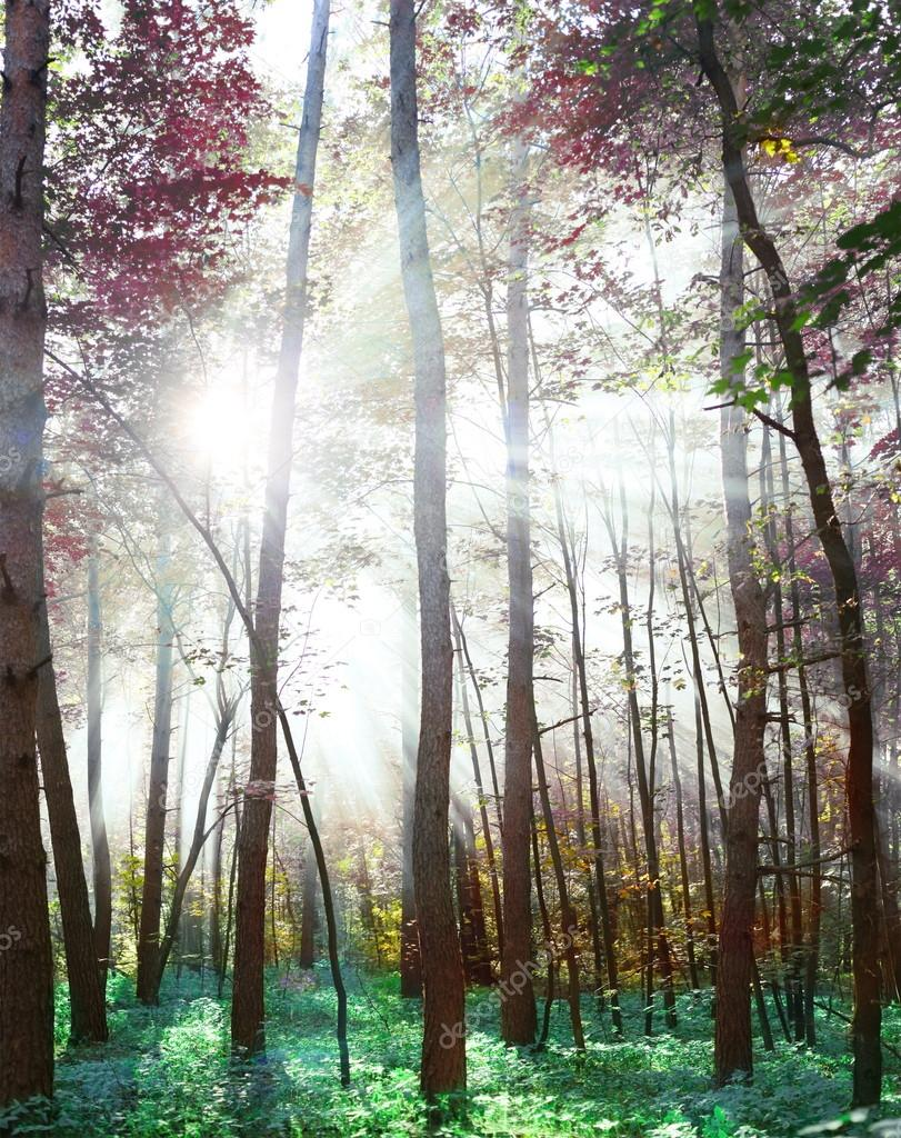 Woodland in fabulous colors.  Stock Photo #14481699