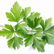 Parsley. — Stock Photo