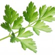 Royalty-Free Stock Photo: Parsley.