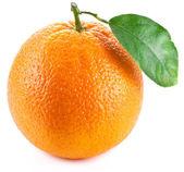 оранжевый с листом на белом фоне. — Стоковое фото
