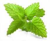 Leaves of melissa — Stock Photo