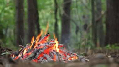 Bonfire in the forest close