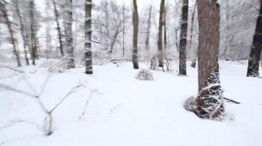 Quick run through the snowy woods — Stock Video