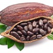 Cocoa pod - Stock Photo