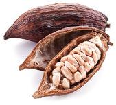 Kakao pod — Stok fotoğraf