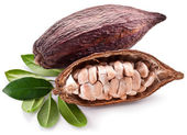 Cocoa pod — Stock Photo