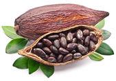 Kakao pod — Zdjęcie stockowe