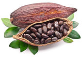 Kakaových pod — Stock fotografie