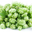 Hops on a white background. — Stock Photo