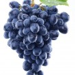 Grapes on white background. — Stock Photo