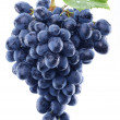 Grapes on white background. — Stock Photo #27383251