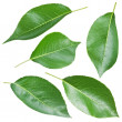 Pears leaves. — Stock Photo #27383427