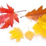 Autumn leaves. — Stock Photo #27689695