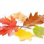 Autumn leaves. — Stock Photo #27689721