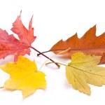 Autumn leaves. — Stock Photo #27689745