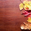 Autumn leaves. — Stock Photo