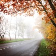 Stock Photo: Highway in autumn forest.