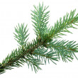 Fir branch — Stock Photo #30872007