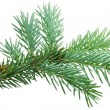 Fir branch — Stock Photo #30872093