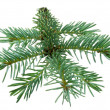Fir branch — Stock Photo #30872157