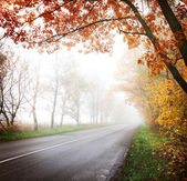 Highway in the autumn forest. — Stock Photo