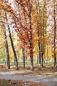 Parque de otoño — Foto de Stock