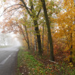 Foggy autumn road. — Stock Photo