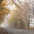 Foggy autumn road. — Stockfoto