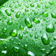 Stock Photo: Water drops on a green leaf background.