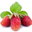 One rich strawberry fruit isolated on a white. — Stock Photo #31955461