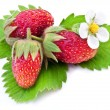 One rich strawberry fruit isolated on a white. — Stok fotoğraf